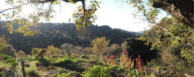 Plongez dans l'univers de la nature, de la santé et du bien-être à Saint-Jean-Cap-Ferrat